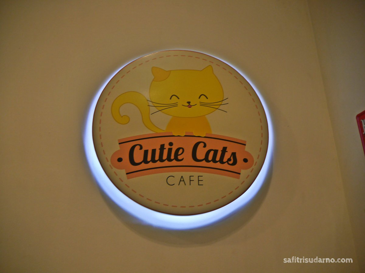 cutie cats cafe
