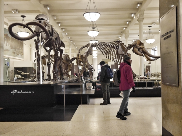 nside American Museum of Natural History